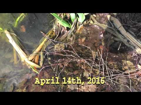 The Frogspawn Fishpond VLOG (Episode 2) - NO WEAPONS!