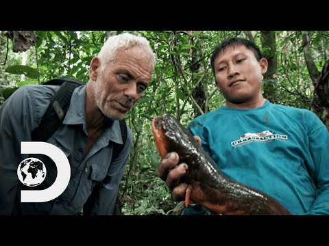 Jeremy Wade Finds The Fish Behind Amazon River Deaths | River Monsters