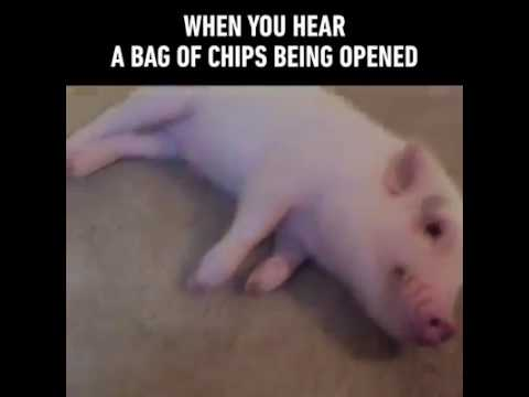 When You Hear A Bag Of Chips Being Opened