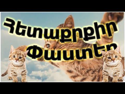 30 Հետաքրքիր ՓԱՍՏ կատուների Մասին/ #youtubeAM