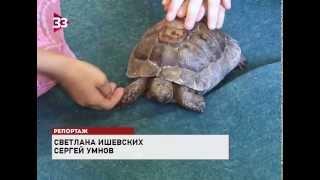 Птица-носорог и страус-эму Вася приехали в музей