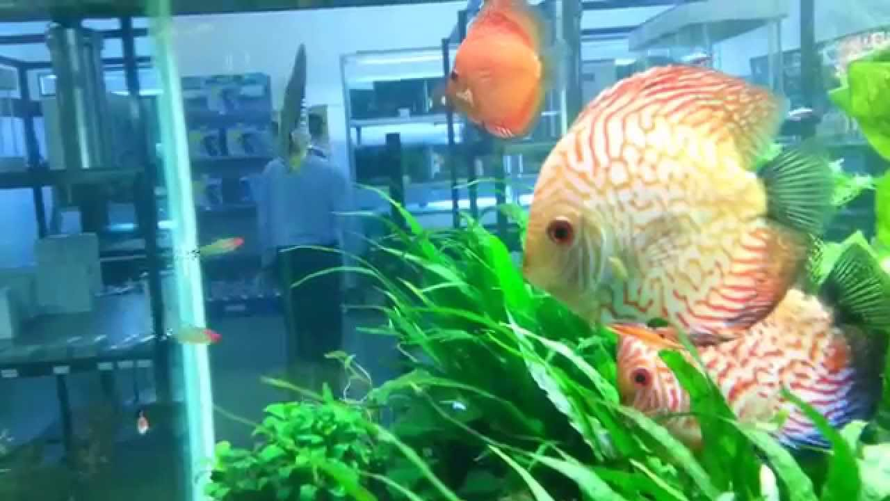 Freshwater aquarium fish in south africa - Dory Pets Awesome Planted Tank Centurion South Africa
