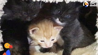 LIVE: Rescue Kittens Learn How To Walk | The Dodo
