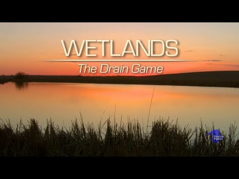 Wetlands: The Drain Game