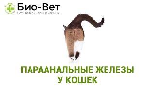 Параанальные железы у кошек. Ветеринарная клиника Био-Вет.