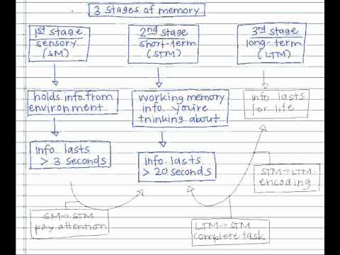 Memory Concept Map.Memory Concept Map Youtube