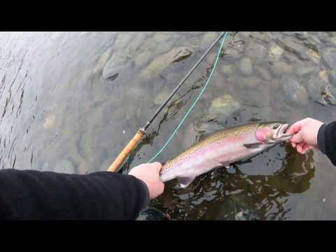 Swinging Rogue River Summer Steelhead