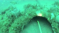 Diving / Spearfighing offshore Jacksonville Fl -- 11lb lobster