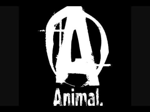 Animal Pak Wallpaper Massivejoes Com Universal Nutrition Animal Pak