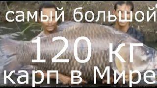 Найбільший короп у світі, ТОП 7 the biggest fish in the world