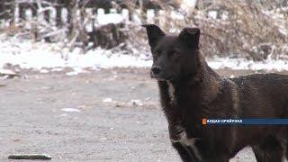Самые громкие случаи нападения собак на людей в Якутии