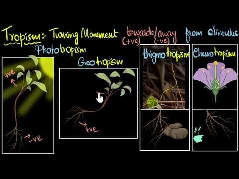 Tropism (Types, Positive & Negative) | Control & Coordination | Biology | Khan Academy