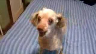 Retardovaný pes