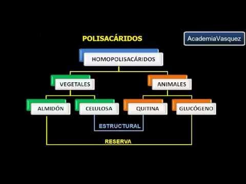 Polisacáridos: Homopolisacáridos