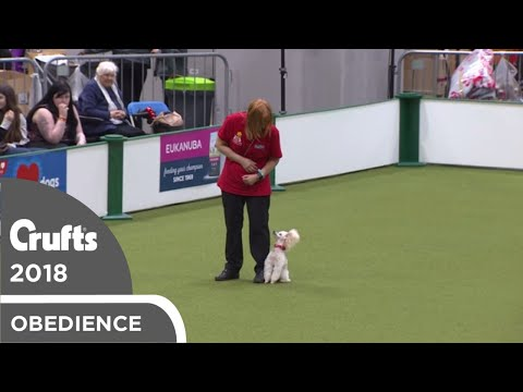 Inter-Regional Obedience - Reserve Class - Part 4 | Crufts 2018