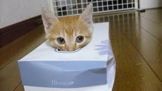 You'll LAUGH SO HARD that you'll TOTALLY LOSE YOUR MIND - Best FUNNY ANIMAL compilation
