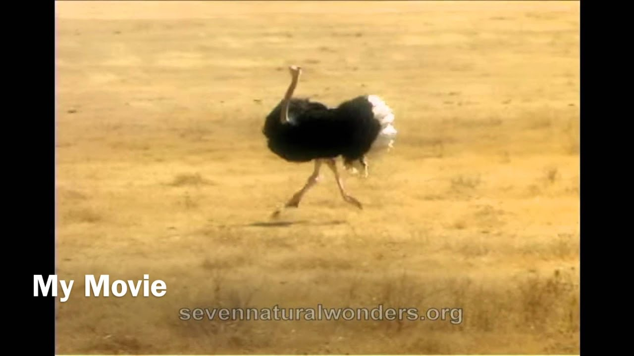funny ostrich meme youtube