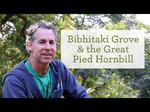 Bibhitaki Grove, Supporting the Endangered Great Hornbill