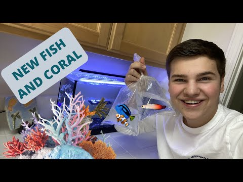 Adding *FISH AND CORAL* To My Nano Reef Aquarium