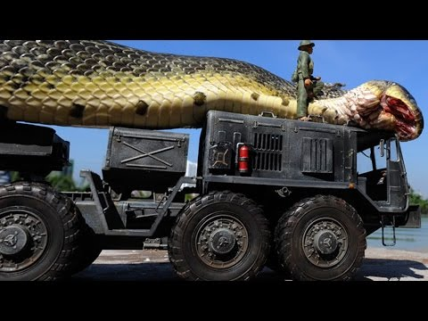 Thumbnail: Giant Snake Caught in Red Sea