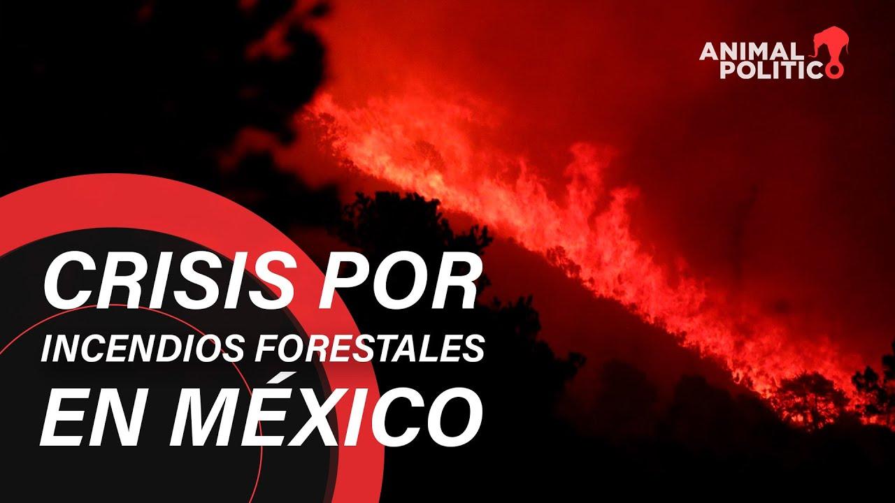 Record en incendios forestales en México