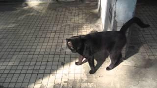 KSN Говорят не повезет если черный кот дорогу перейдет