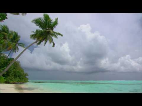 [10 Hours] Maldives Palm Tree, Beach and Waves - Video & Audio [1080HD] SlowTV