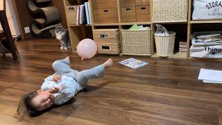 隙を狙って娘のオモチャに猫パンチする猫 ノルウェージャンフォレストキャットA cat that punches into daughter's toys aiming for a chance.