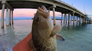 LIGHT TACKLE Bridge Fishing CHALLENGE -Gag Grouper and Flounder! (West Coast Florida Fishing)