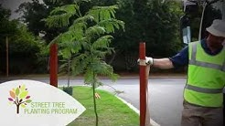 City of Stirling - How to Plant a Street Tree - Street Tree Planting Program