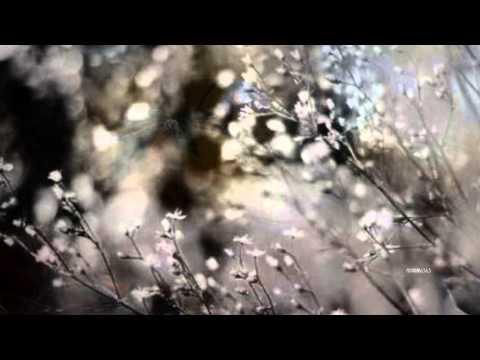 Bobby Goldsboro - Honey (HQ) +lyrics