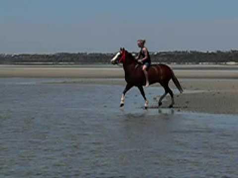 Toogoom Brandy at the beach 2