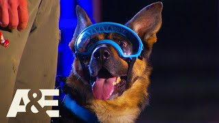 Rony the GoggleWearing K9 WINS Competition | America's Top Dog (Season 1) | A&E