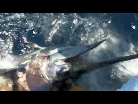 Marlin Fishing Dominican Republic
