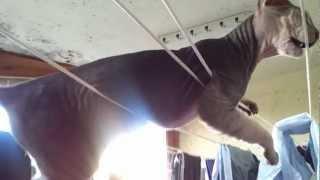 Кот на балконе (ну нравится ему лежать на веревках)
