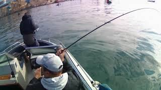 Рыбалка в Крыму на Черном море 2020 селёдка пикша окунь хамса