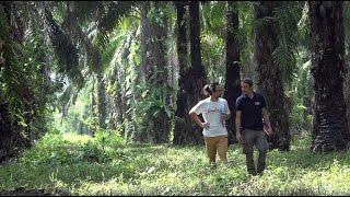 Neuer Palmöl-Report und großer Kekse-Check