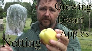 Growing Dwarf Apples & Netting from Pests Golden Dorset