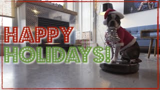 Dog on a Roomba - Holiday Edition!!