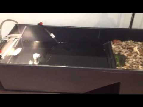 Res Turtle Waterland Tub Youtube