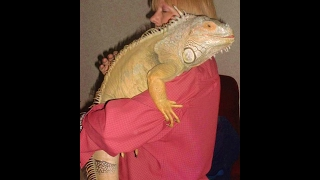 Top 20 exotic pets that you can buy and own