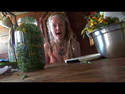 Let's learn how to make a California Poppy tincture!