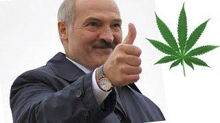 О легализации марихуаны в Беларуси и не только