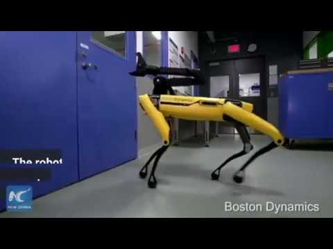 A robot dog can open the door for its companion?