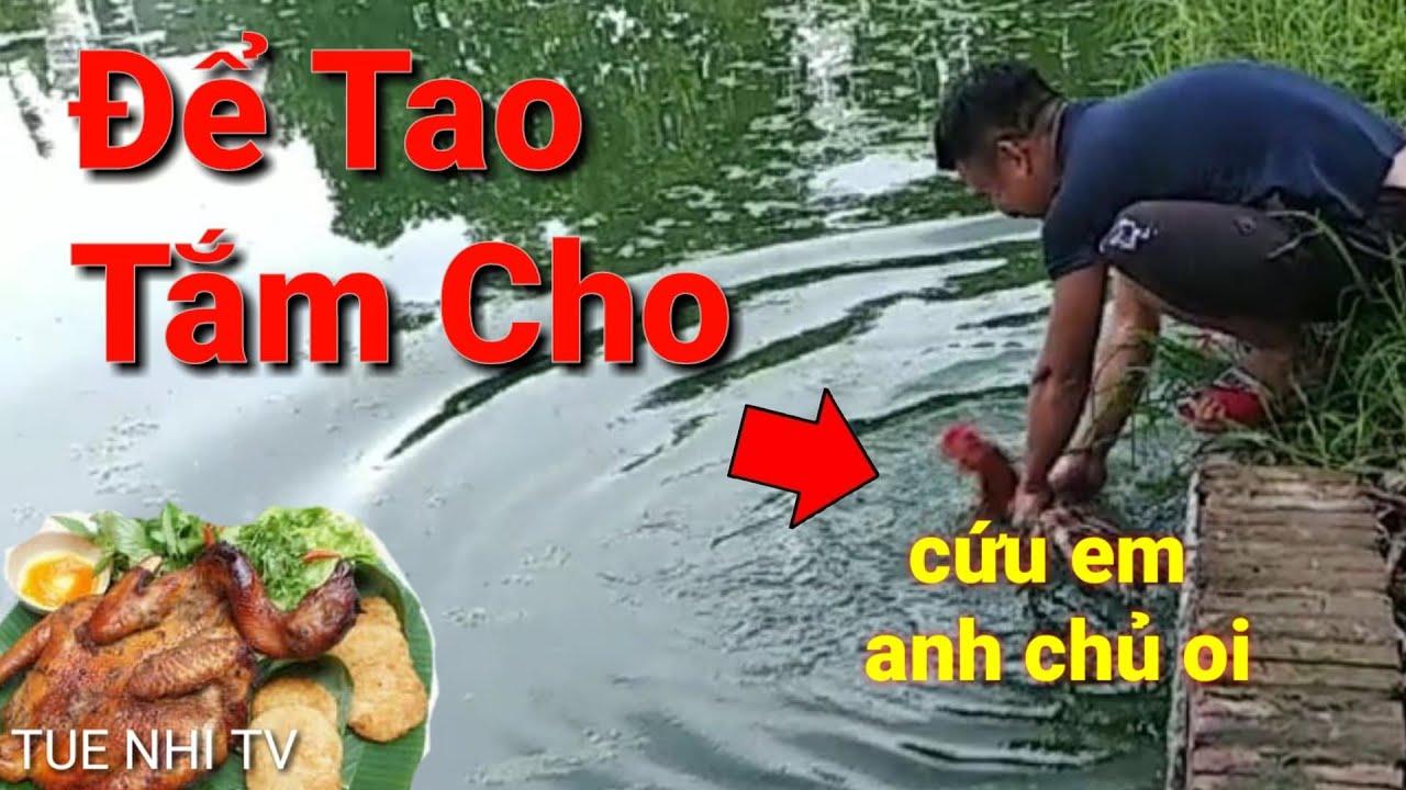 Câu Cá Được Gà | Cách Câu Cá Hiệu Quả Nhất | TUE NHI TV | most effective fishing