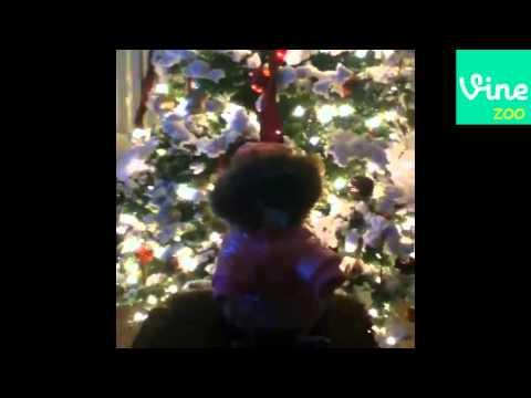Crazy Dog Vines December 2013