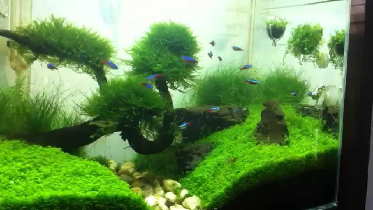 My Aquascape Tank