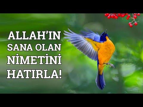 Derde Düşen Dinlesin - Allah'ın Sana Olan Nimetini Hatırla