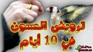 كيفية ترويض طائر الحسون البري او القفص وتجعله يغرد على اليد ولا يخاف
