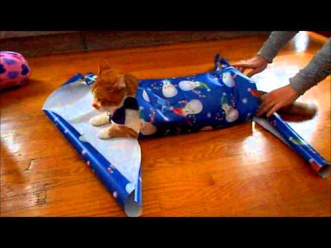 How To Wrap Your Cat For Christmas